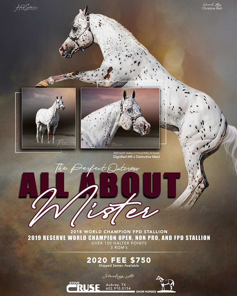 All About Mister FEATURED 2020
